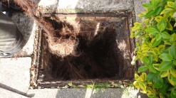 drain smell root removal